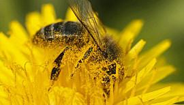 Atelier Web Reporter CINOR - La pollinisation des abeilles – CM2 La Chaumière